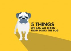 5 Things Doug The Pug Can Teach You About Branding